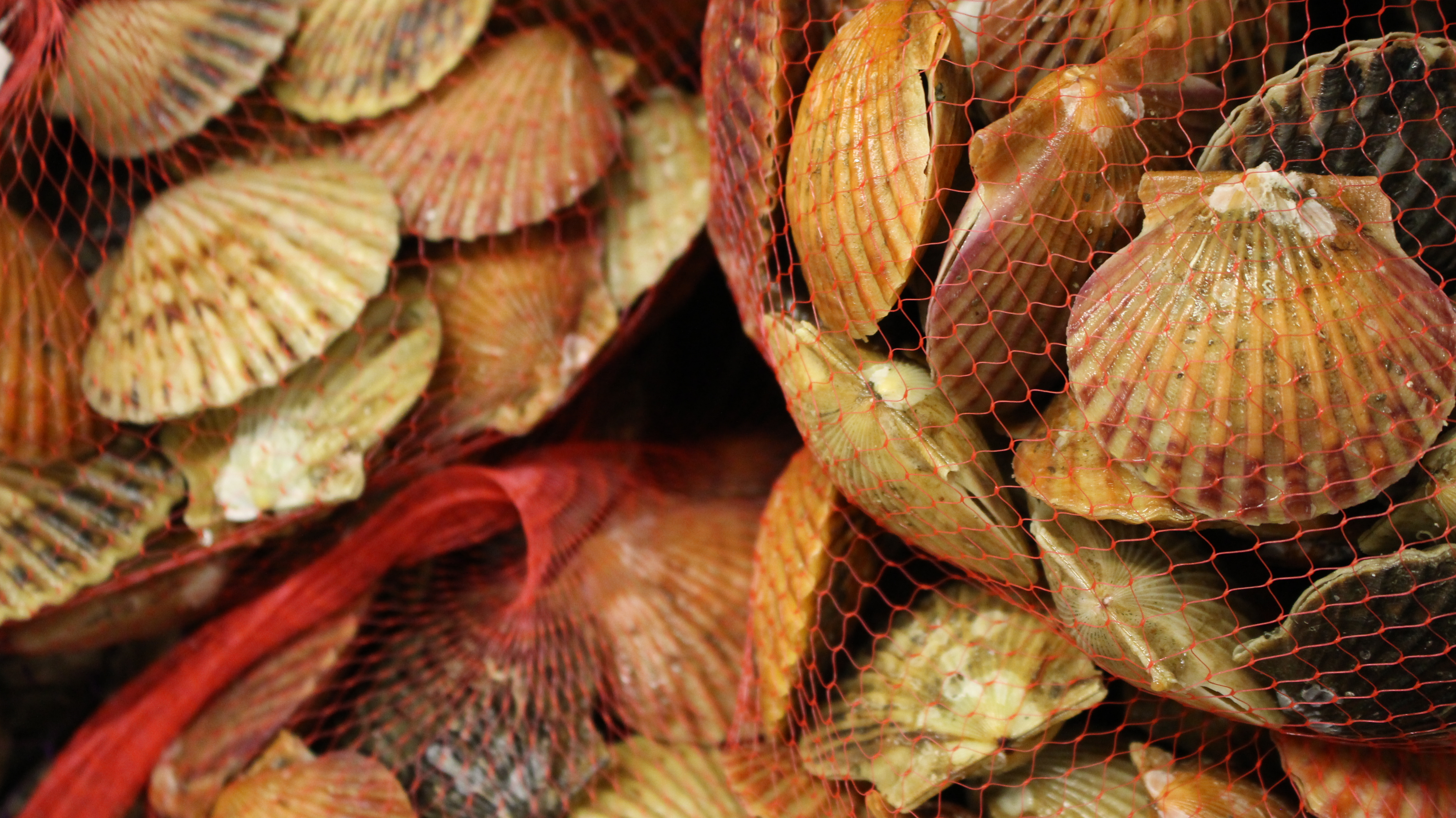 Tis the Season for Shellfish