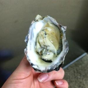 kwakwala oyster