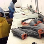 Samuels Seafood Video Market Update