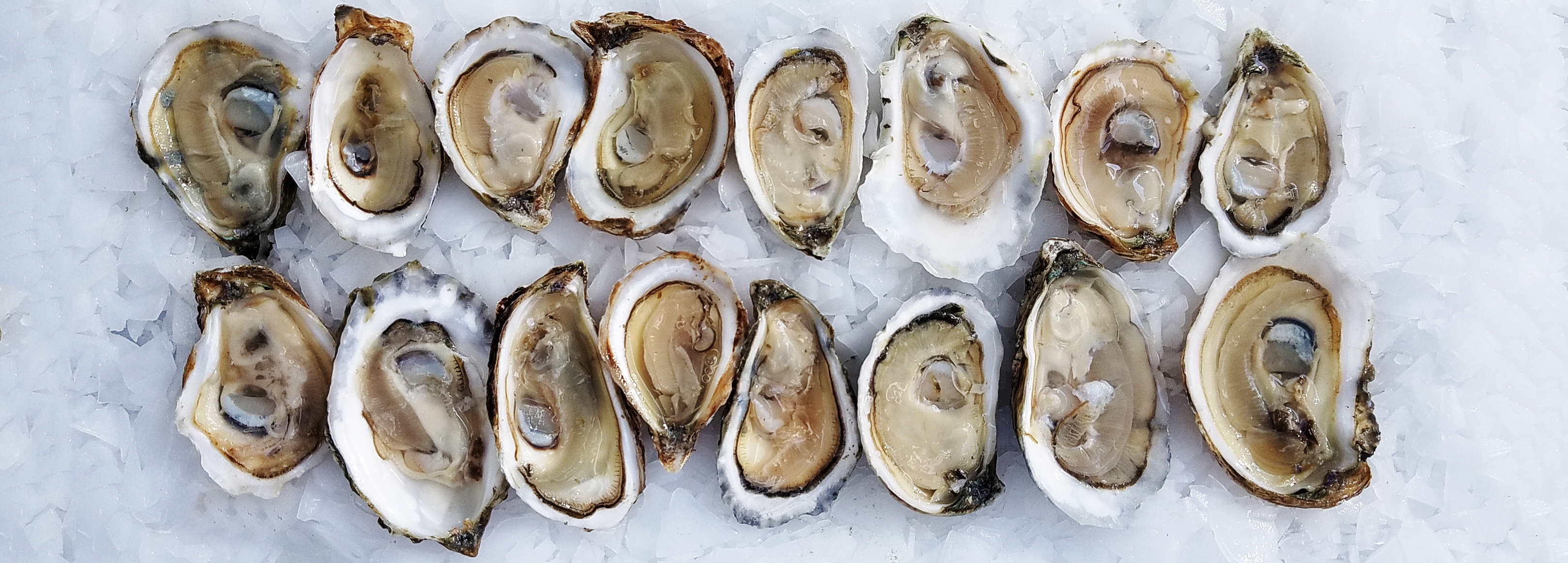 A No-Nonsense Guide to East Coast Oysters