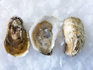 A Dozen Oysters We're In Love With