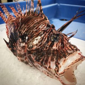 Scary Fish You Can Actually Eat (And Get at Samuels)