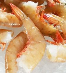 Texas Gold Shrimp: as Good as Gold