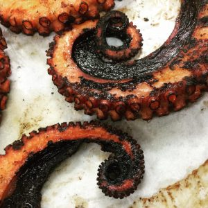 Featured Monthly Special: Fremantle Octopus